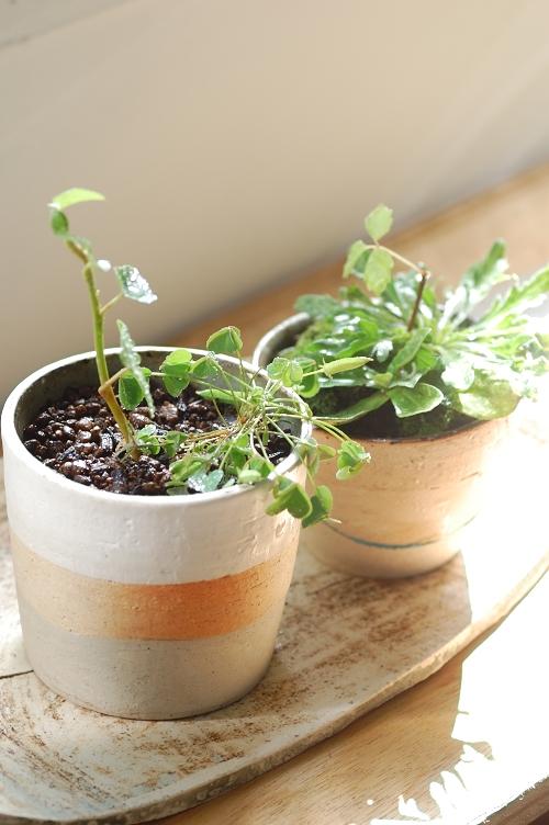 鉢植え01